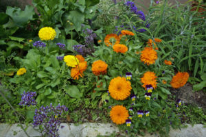 A mix of colours in the spring flower bed
