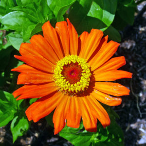 large attractive bright flowers